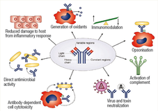 Immune System Activity Figure 3