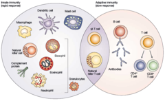 The Immune Response Figure 1