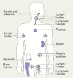 The Immune Response Figure 3