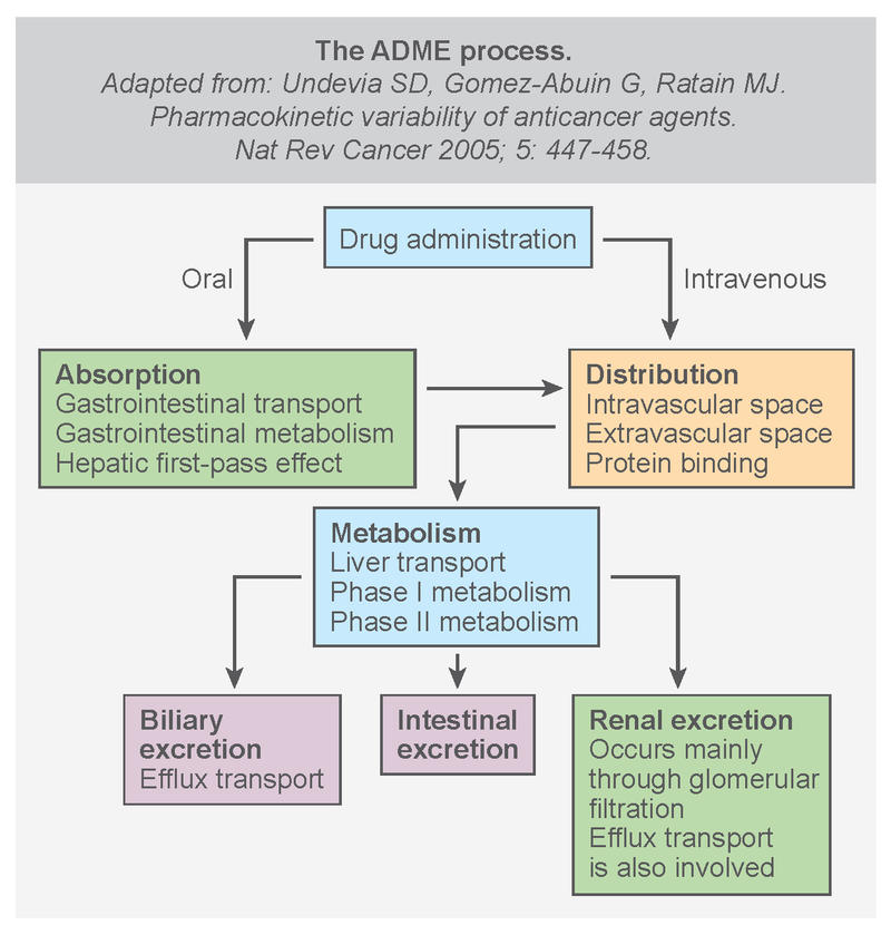 Characteristics of Anti-Cancer Drug ADME - Overview