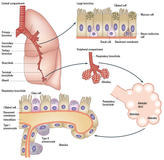 pathogenesis-lung-cancer-1