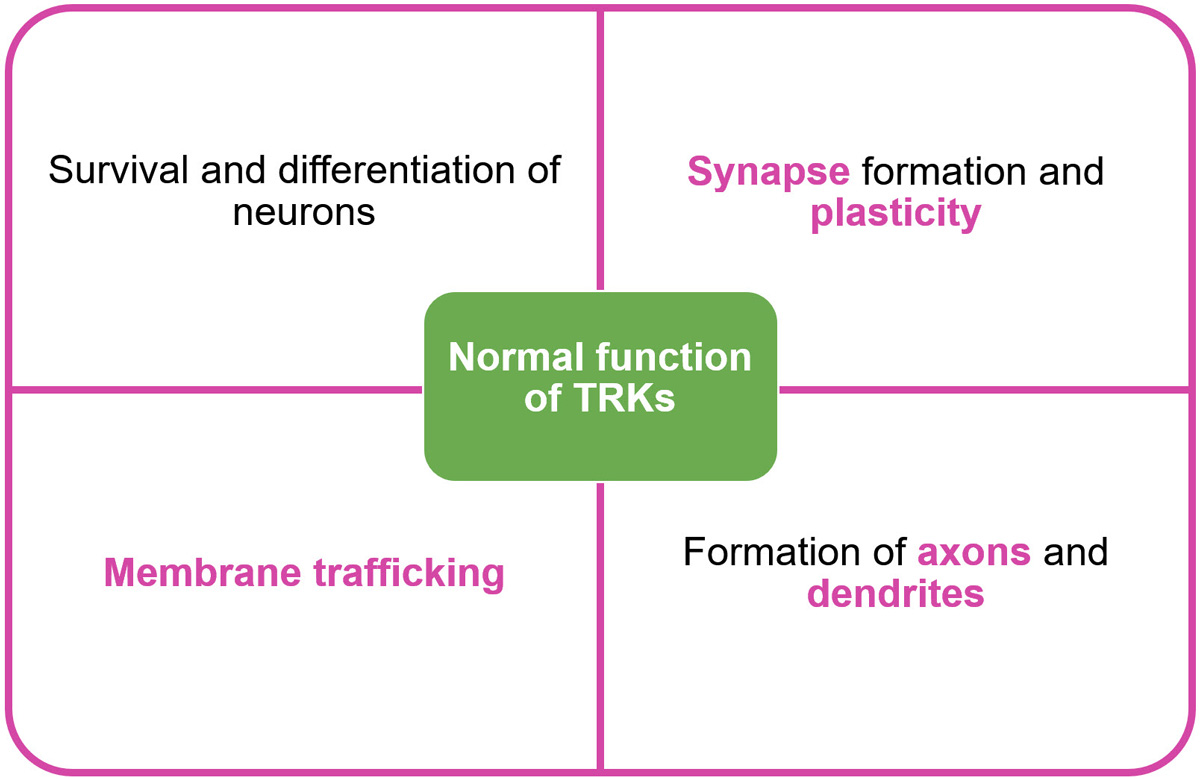 Figure 1: Normal Physiological Function of TRKs