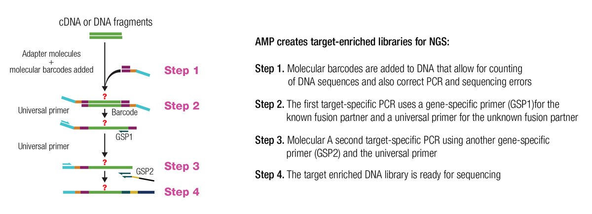 Figure 13: AMP for the Detection of Gene Rearrangements